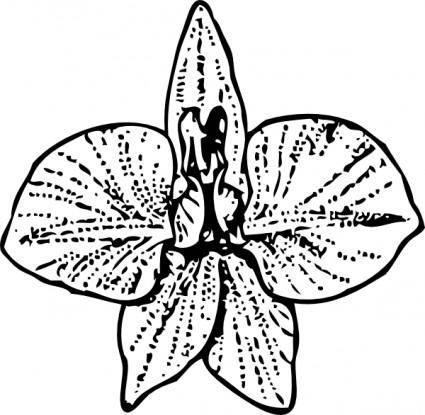 Larkspur clip art