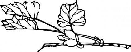 Branch With Flower clip art