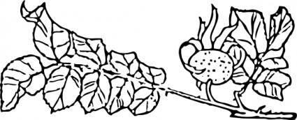Rose Branch clip art