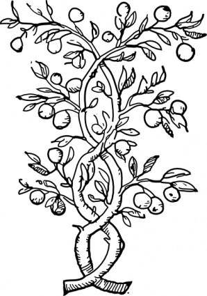free vector Fruit Tree Branches clip art