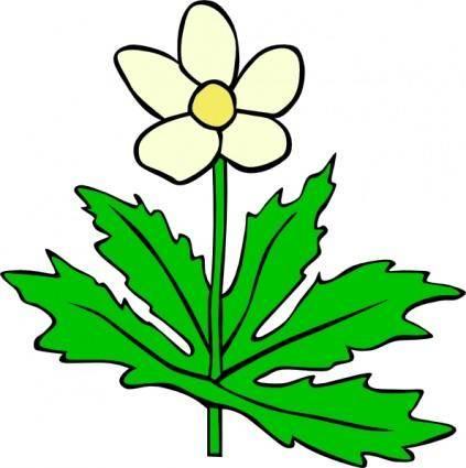 Anemone Canadensis Flower clip art