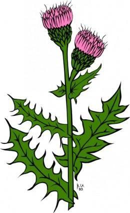 Cirsium Arvense clip art