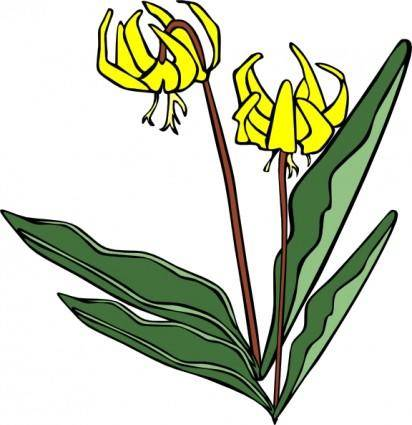Gg Erythronium Grandiflorum clip art