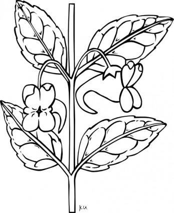 free vector Stem With Flower Outline clip art