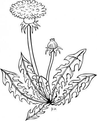 Ku Taraxacum Officinale Outline clip art