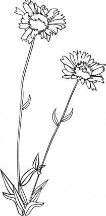 Gg Gaillardia Aristata Outline clip art