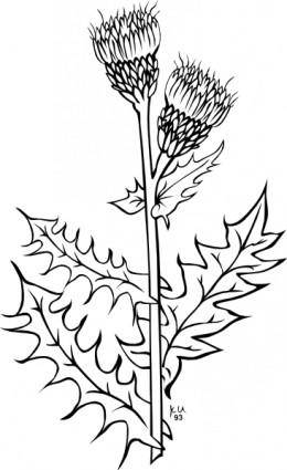 free vector Ku Cirsium Arvense Outline clip art