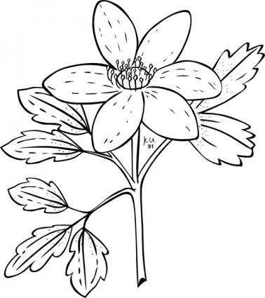 Ku Anemone Piperi Outline clip art
