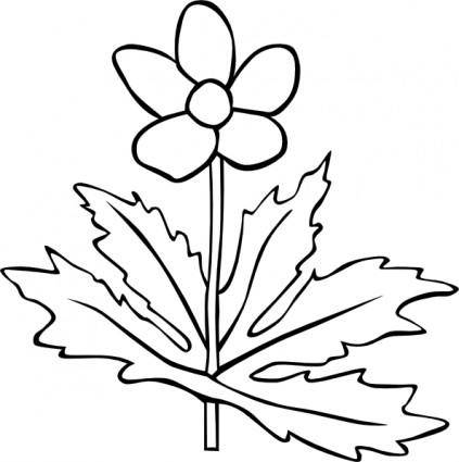 free vector Gg Anemone Canadensis Outline clip art