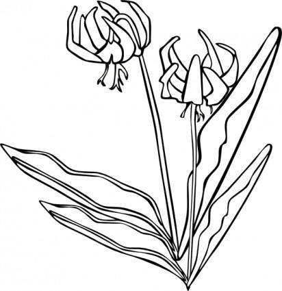 Gg Erythronium Grandiflorum Outline clip art