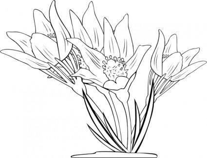 Anemone Patens clip art