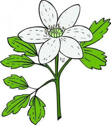 free vector Anemone Piperi Windflower clip art