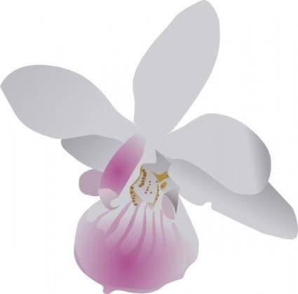 free vector Orchidea clip art