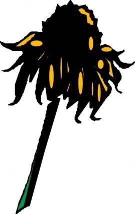 Flower Rudbeckia clip art