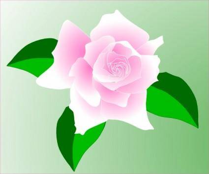 Pink-rose clip art