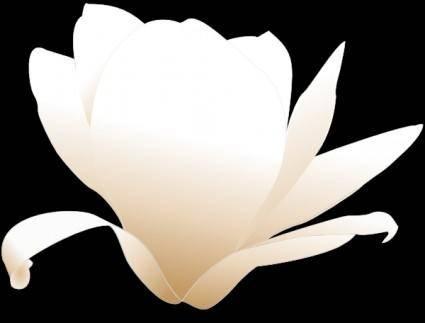 Magnolia-white clip art