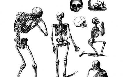 HUMAN SKULLS AND SKELETONS 11415
