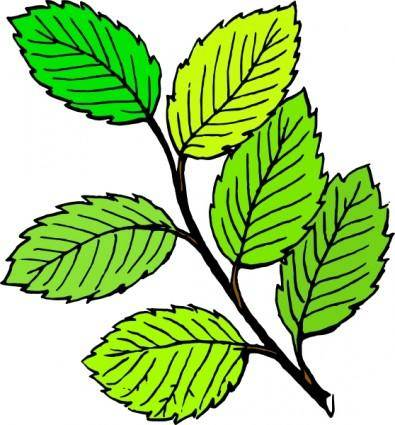 Summer Leaves clip art