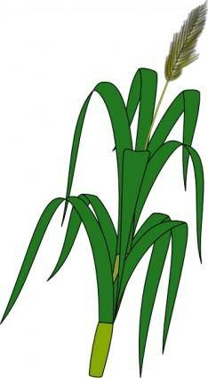 free vector Wheat Plant Food clip art