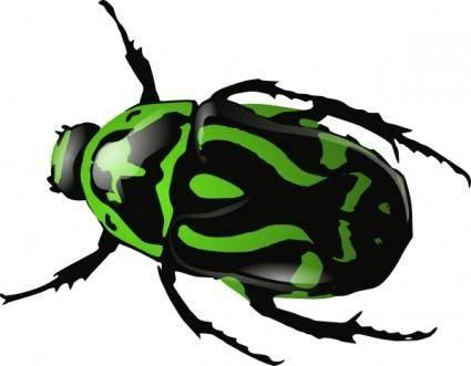 Green Beetle  clip art
