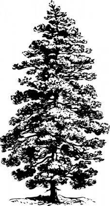 free vector Pine Tree clip art