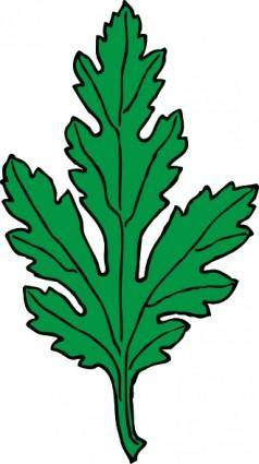 Ivy Leaf Green Chrysanthemum clip art