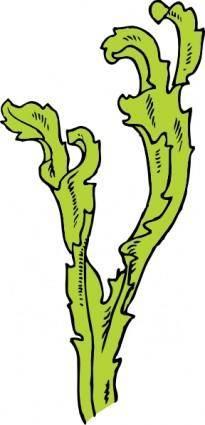 Sea Weed clip art