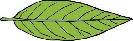 Lanceolate Leaf clip art