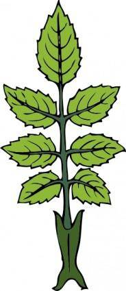 Mint Branch clip art