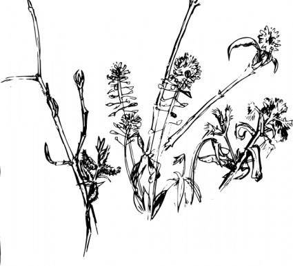 Forest_plants2004 clip art