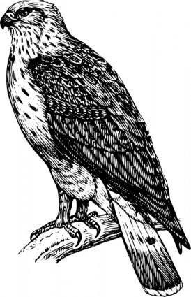Buzzard Raptor clip art