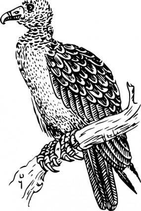 free vector Buzzard clip art
