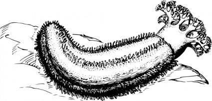 free vector Sea Cucumber clip art