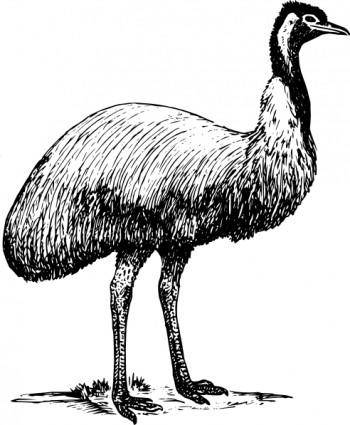 Emu Animal Bird clip art