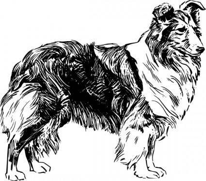 Shetland Sheepdog clip art