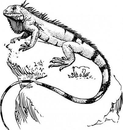 free vector Iguana clip art