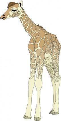 free vector Baby Giraffe clip art