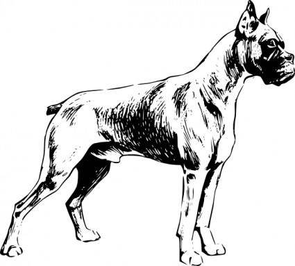 Boxer clip art