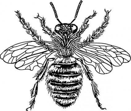 Bee Queen clip art