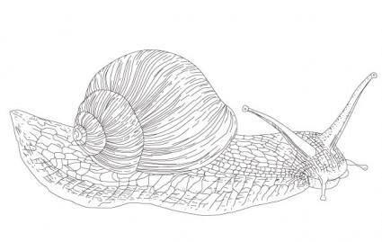 free vector Vector Snail