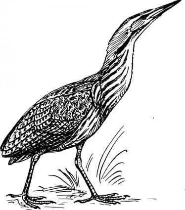 Bittern Bird clip art