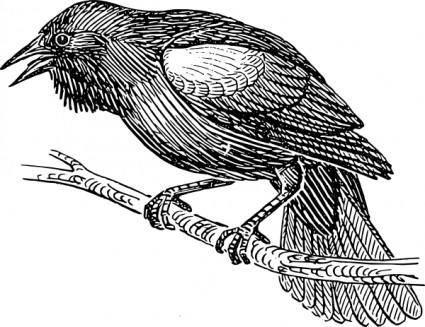 Black Bird clip art