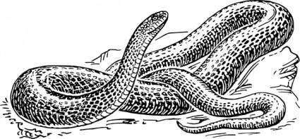 free vector Black Snake clip art