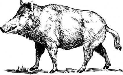Boar clip art