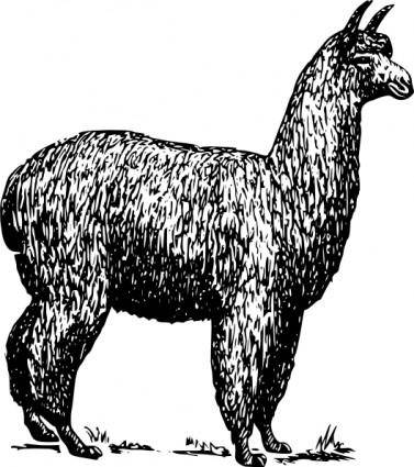 Alpaca clip art