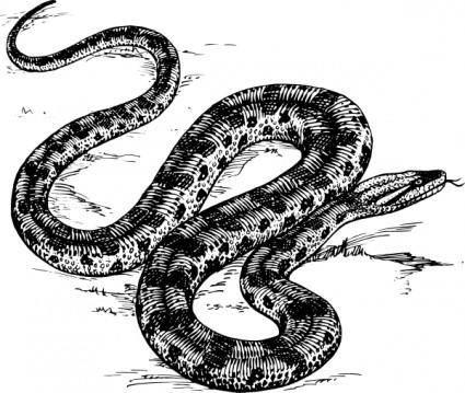 free vector Anaconda clip art