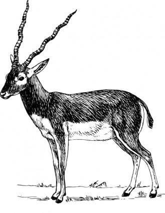 Antelope clip art