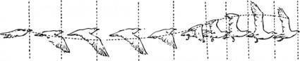 Bird Flight clip art