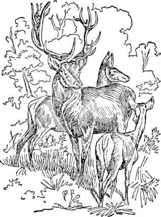 Outline Red Deer clip art