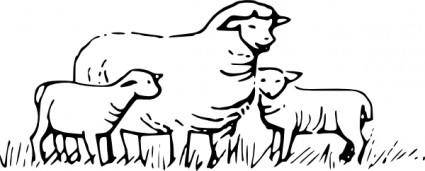 Sheep Standing clip art